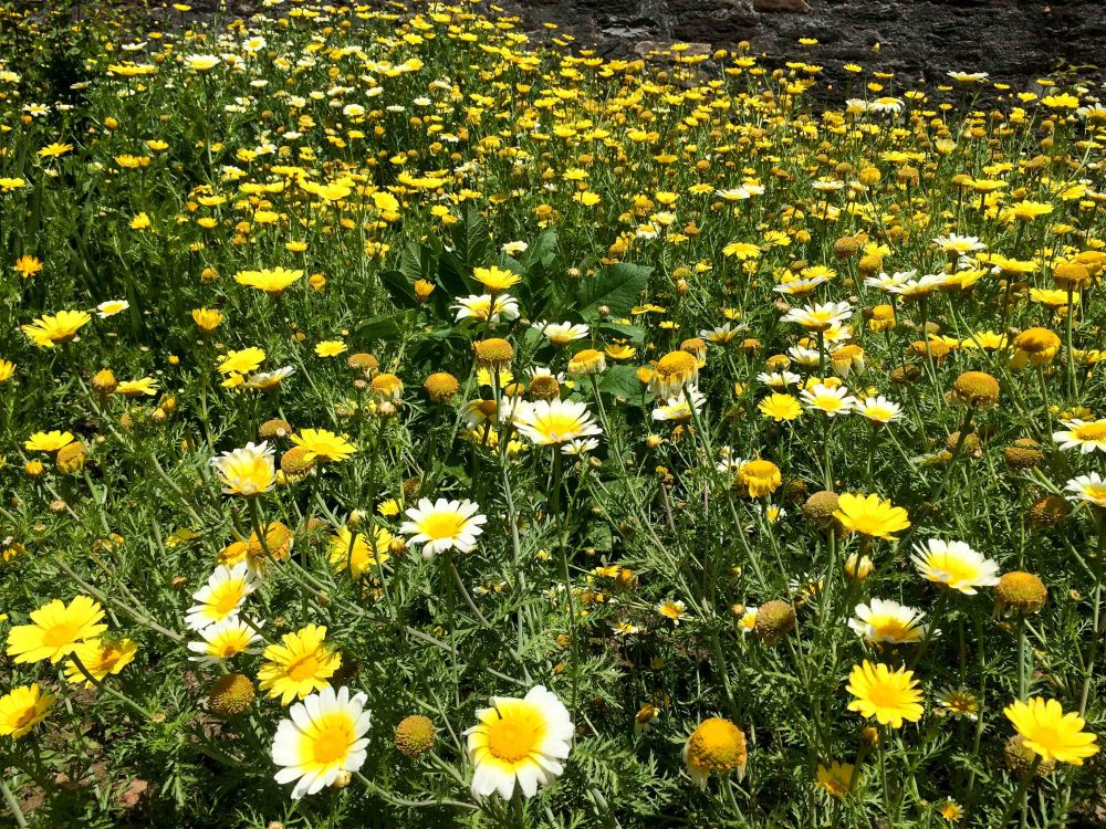 Carpet of flowers in Archaeological Museum compound
