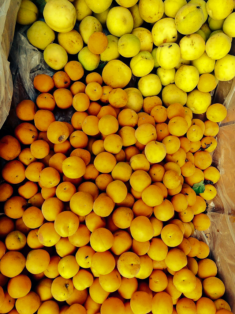 Fresh apricots from the orchards
