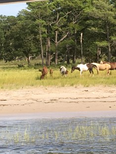 6-Chincoteague-Photo-Aug-30-5-24-23-PM