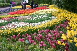 Tulip-Time-Rhine-6