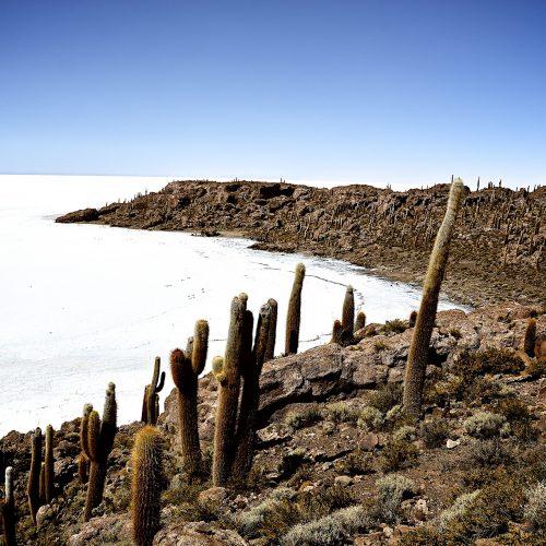 Incahuasi Island | Salar de Uyuni | Bolivia