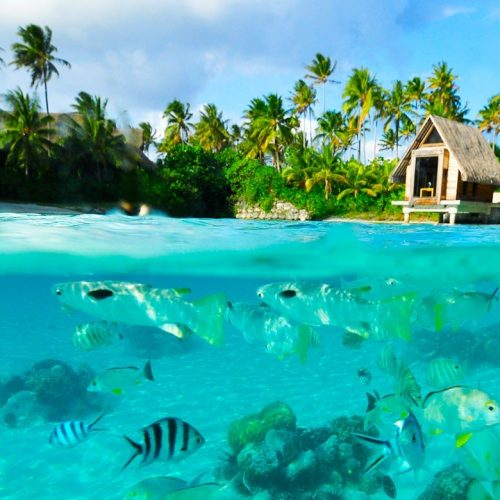 borabora-nature-island-fish