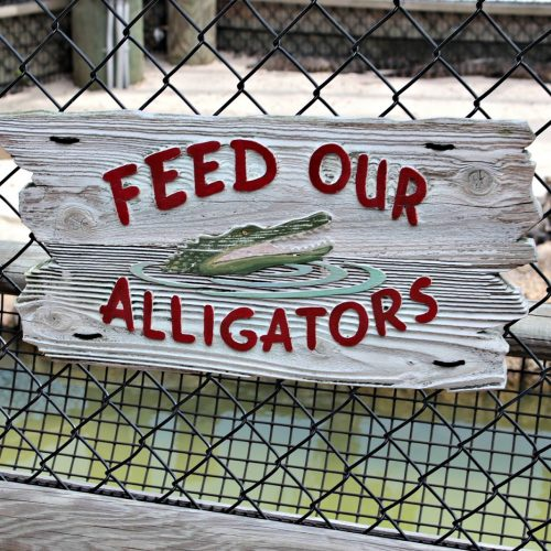 Congo River Golf - Orlando - Florida - Alligators