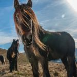 things to do lake district_rent fell ponies