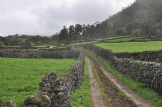 Terceira, Azores, farming