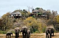 lhills_elephant_1