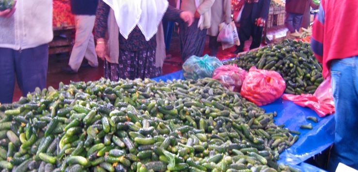 World Markets-Rural Turkey-Cucumbers