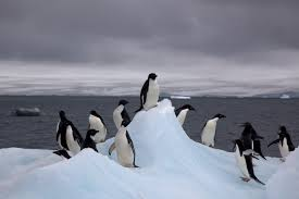 Does a responsible tourist visit Antarctica, Earth's Last Frontier?