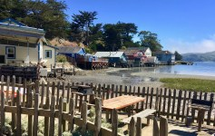 Hog Island Oyster Company: From the bay to your table!