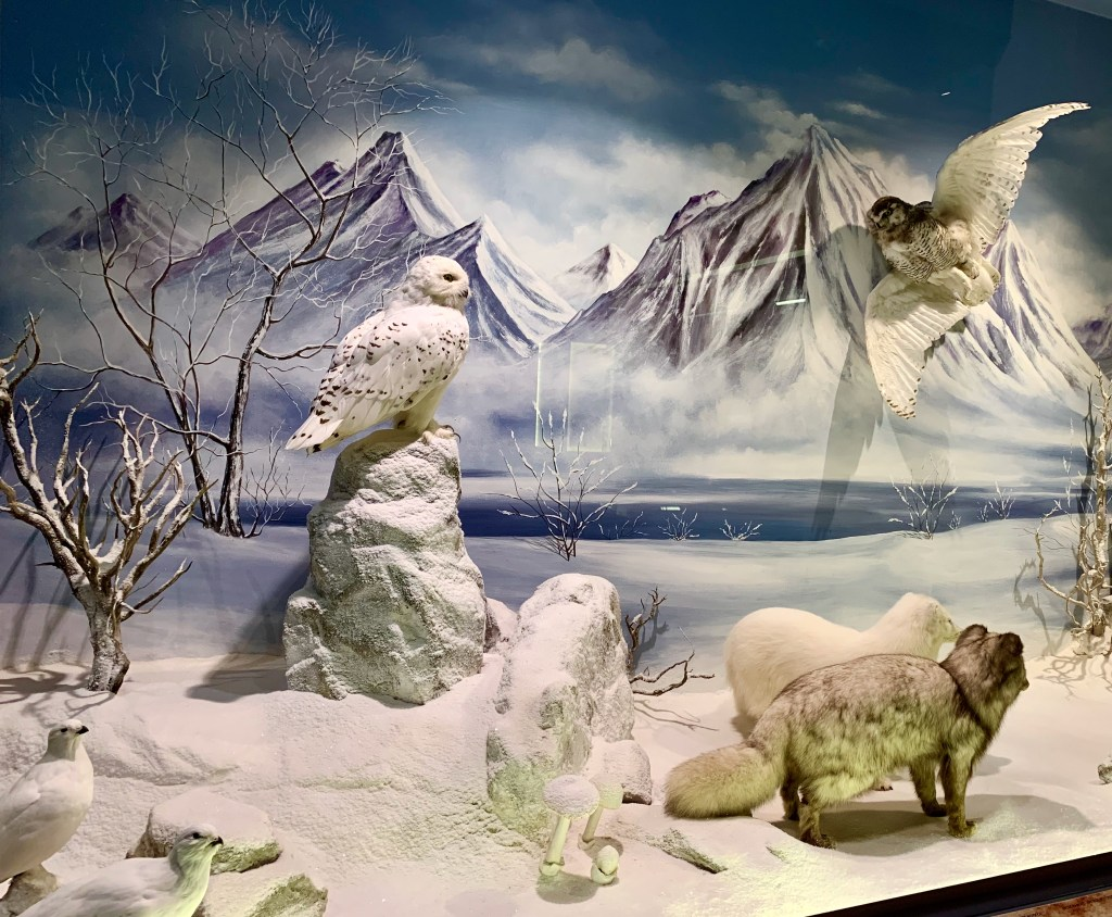 Natural History Museum at Meteora--Arctic Animals