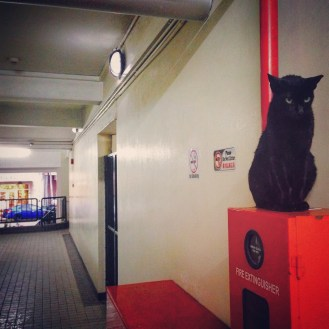 A lucky black cat