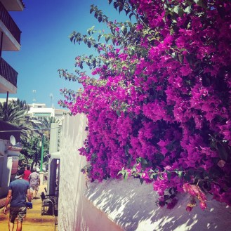 The colour of the Bouganvillea was incredible.