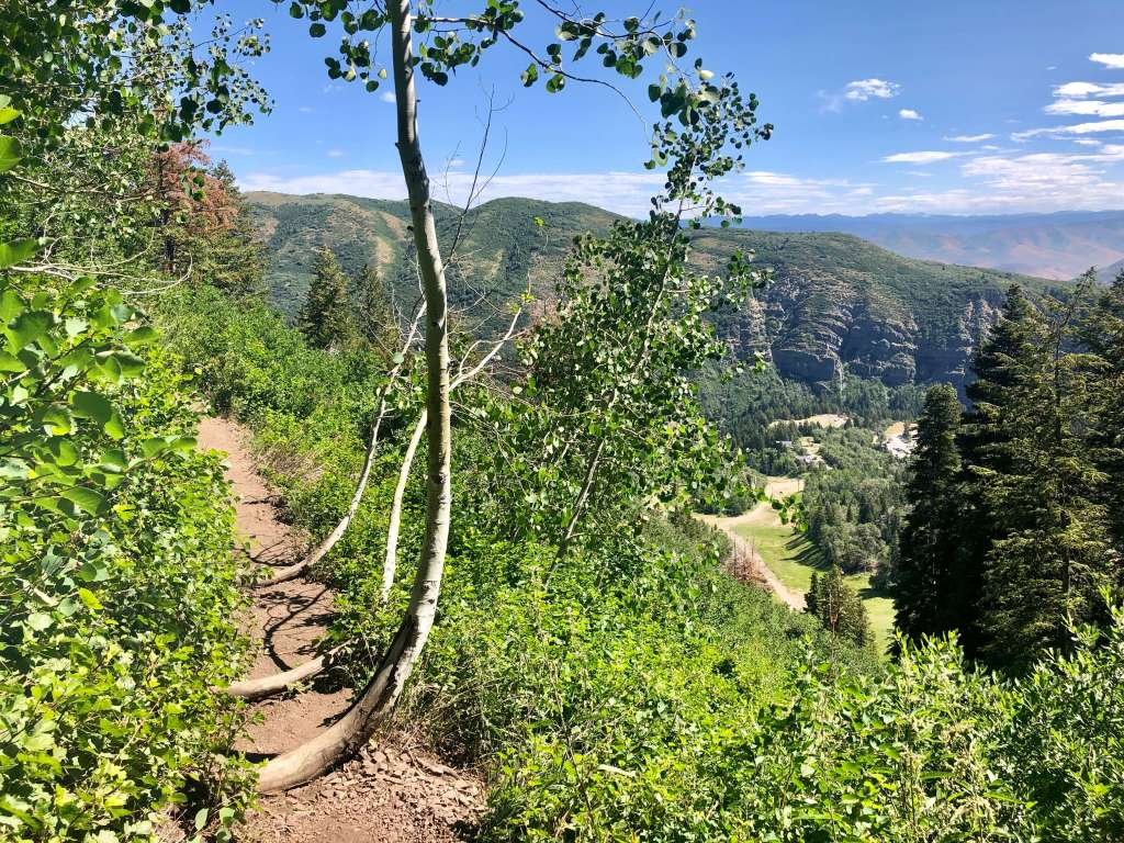 Trees overlaying the path to Stewart Falls in Utah and a beautiful mountain view.