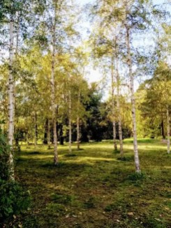 Green trees and Green spaces of Helsinki