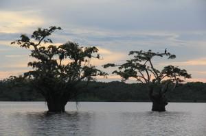 Ecuador_Amazonas_013