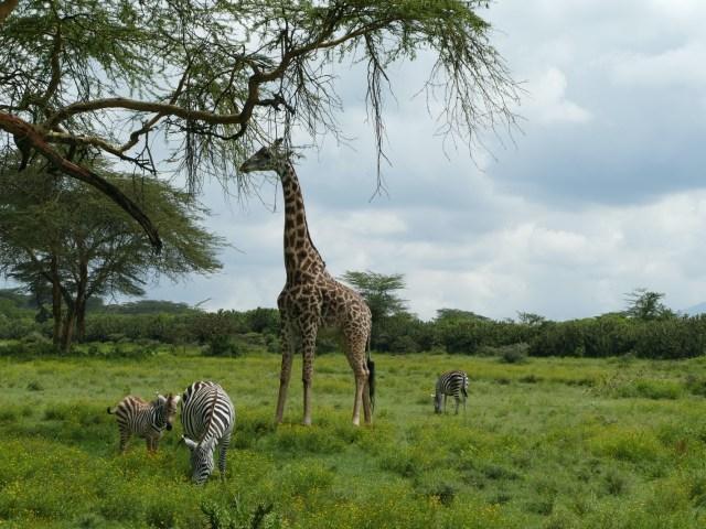 Kenia: Zwischen Rift Valley und dem Indischen Ozean