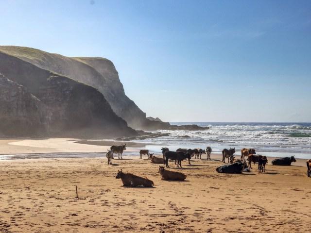 Südafrika – Elefanten, Berge & Wilde Küste