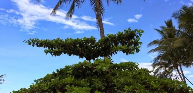 Tropical Beachside View