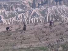 Trek through the rose valley, women working on the grape crops