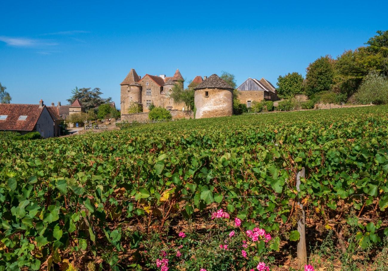 Taking It Slow in Burgundy