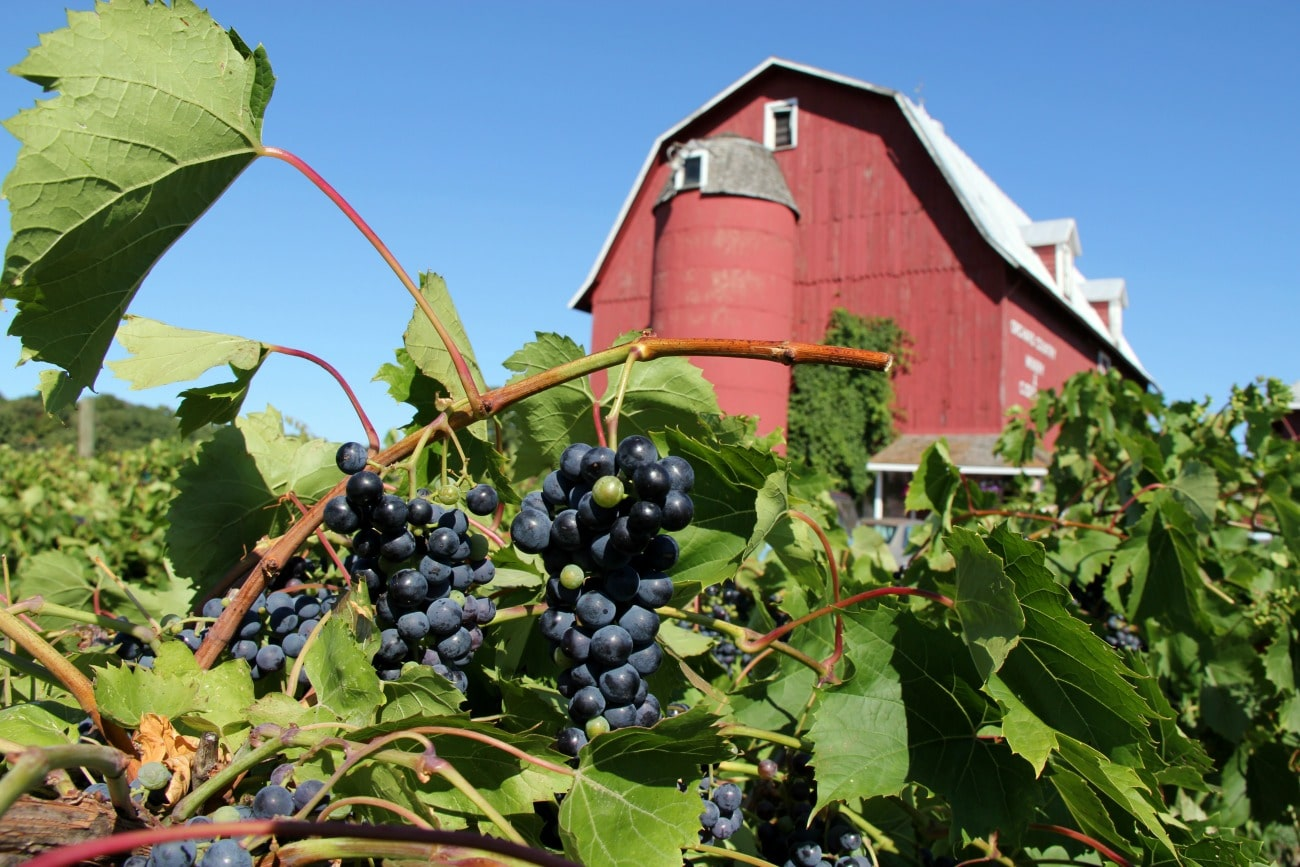 Door County, Wisconsin's Wine Trail