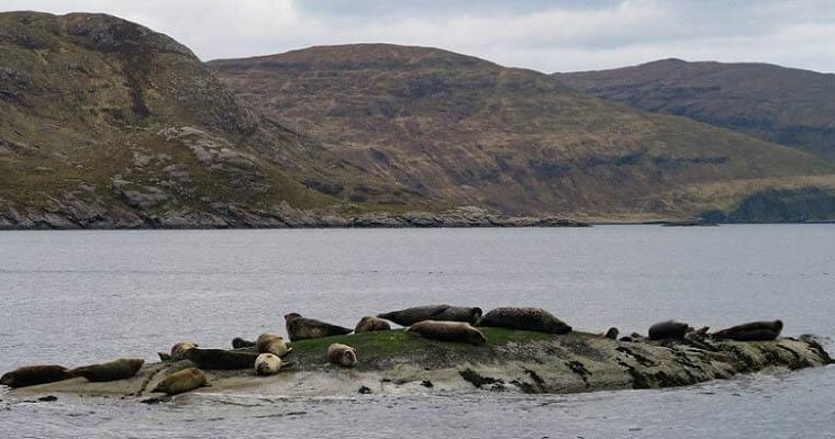 seals colony loch coruisk
