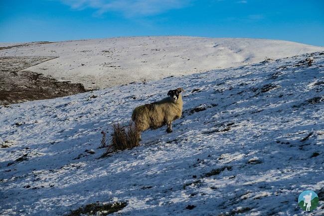 mount blair cateran trail