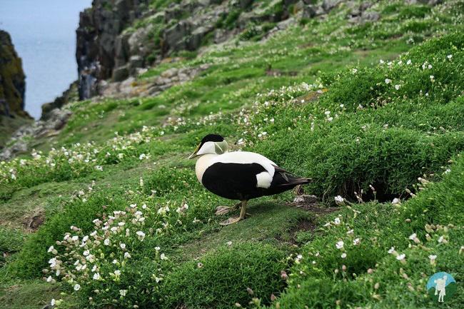 isle of may north berwick boat trips