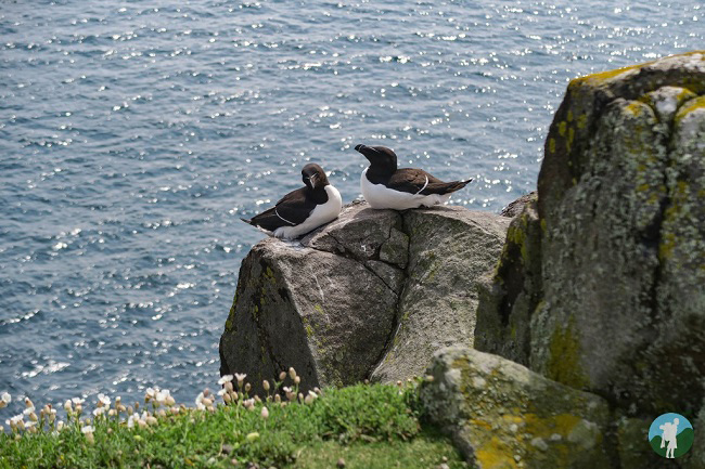 isle of may seabirds