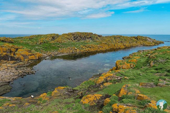isle of may boat trips