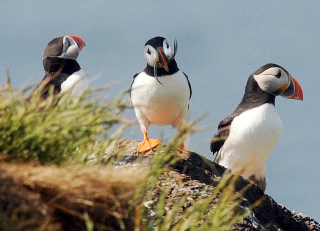 puffins seabird centre