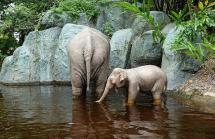 1.1434118989.elephants