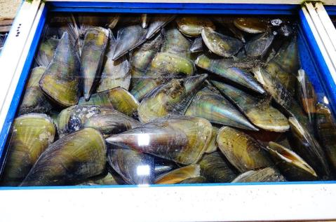 3.1458866212.enormous-shellfish-market