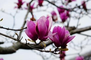 3.1459027436.magnolias