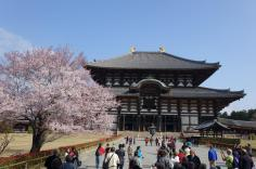 3.1459193119.todai-ji-at-cherry-time
