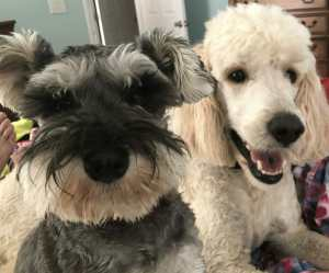 My dogs Munson and Murray