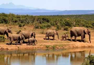 Six Best Nature and Wildlife Experiences Across Africa Travels with Bibi