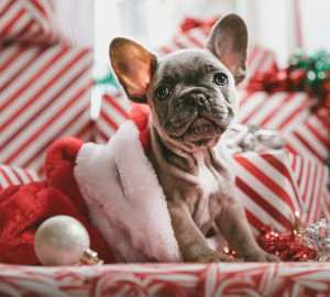 Holiday Travel: Tips For Traveling With Your Pet Travels with Bibi
