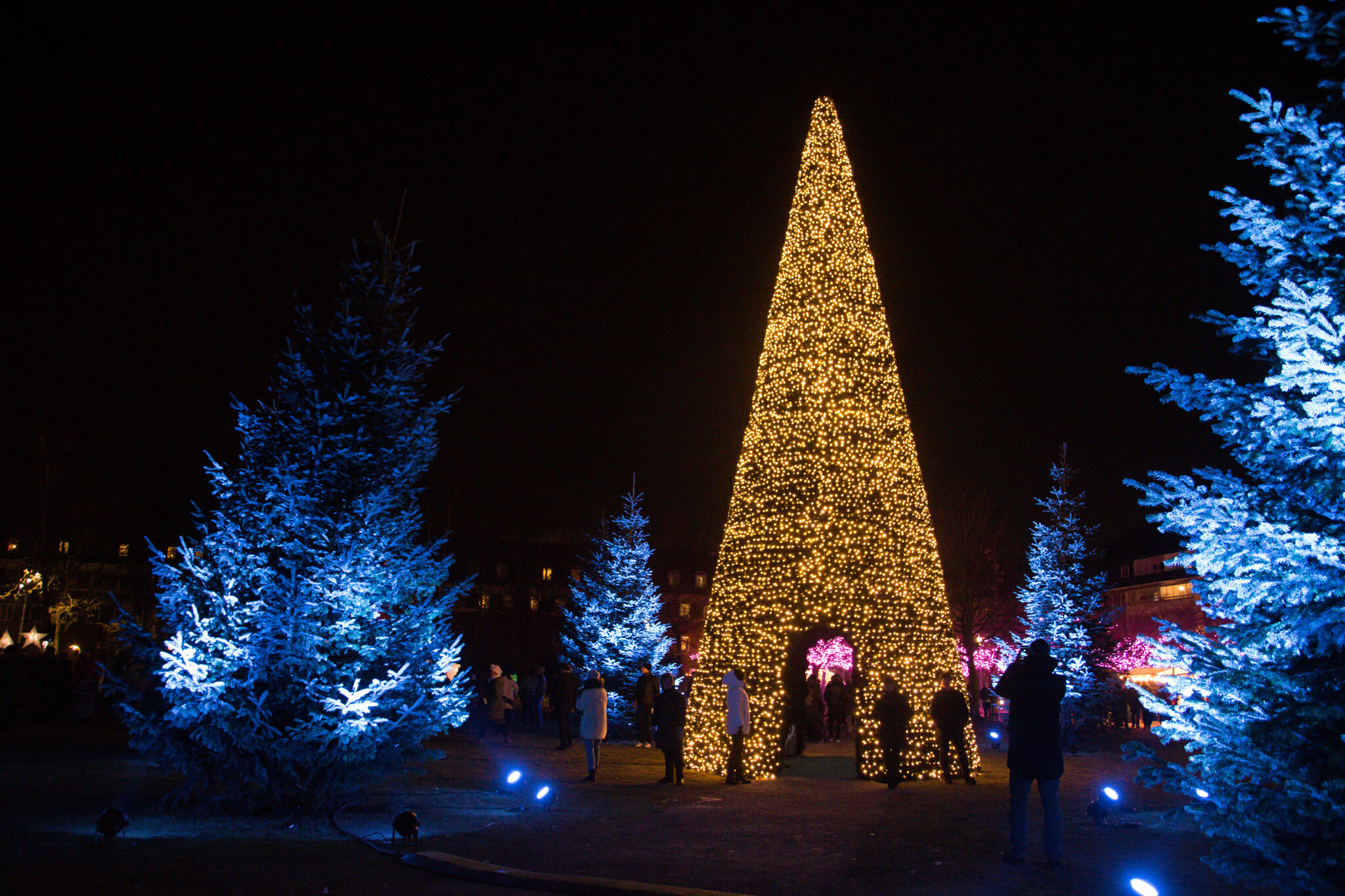 Make Christmas Memories: See Holiday Lights in Asheville, NC ...