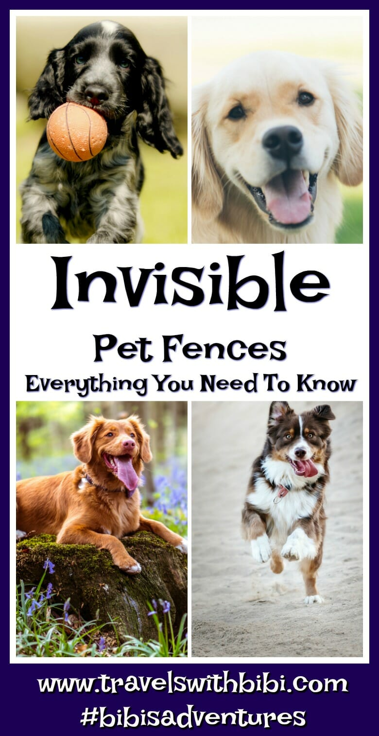 Invisible Pet Fence 101: Everything You Need To Know