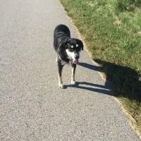 Dog Walk Challenge: Days 415 to 421
