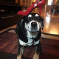 Howlidays: Red Shoe Day