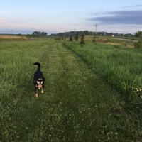 Dog Walk Challenge: Days 443 to 449