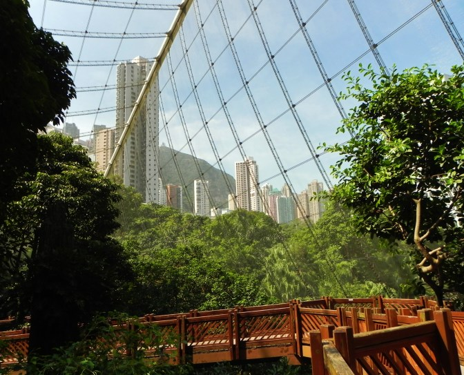 China, Hong Kong, Hong Kong Park, parks, birds, aviary, Edward Youde Aviary
