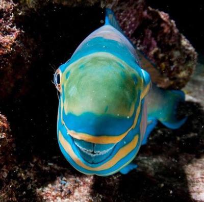 Parrotfish smile