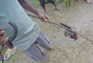 Bat for dinner anyone? Kiriwina Island, Papua New Guinea
