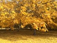 Walnut orchard in autumn