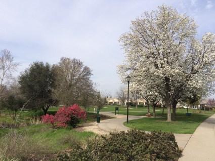 Schoolhouse Park. Landscaped right, wild left