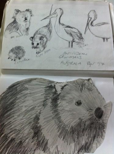 Australian animals from my Australia sketchbook