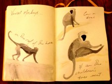 Paintings of Vervet Monkeys from my Tanzanian sketchbook.